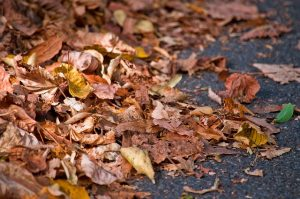 Laub auf der Straße im Herbst