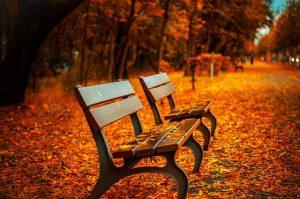Parkbänke im Herbst mit Laub