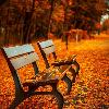 Herbstlaub auf Gehweg und Bänken