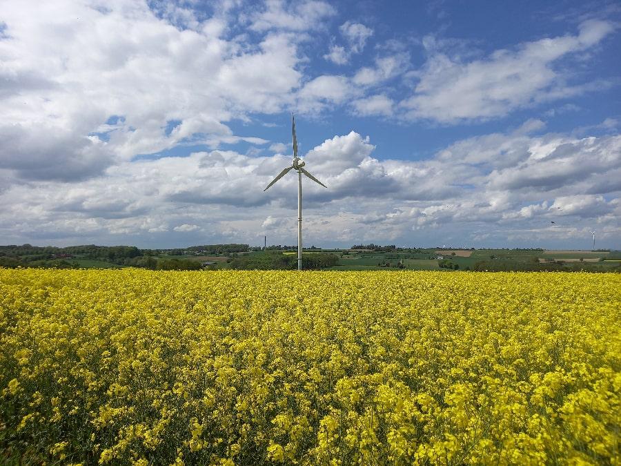 Windenergieanlagen im Rapsfeld